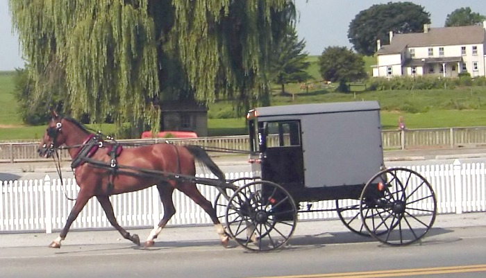 amish horse and buggy. Amish visit