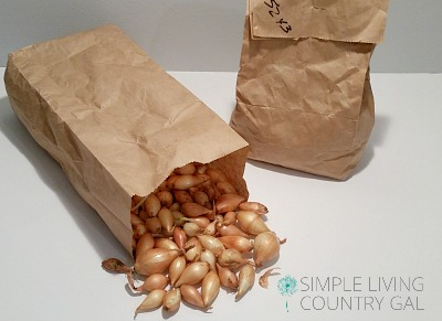 bag of seed onions. How to grow bigger onions