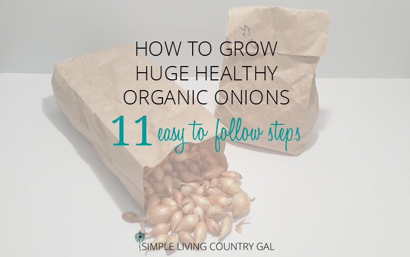 How To Grow Bigger Onions