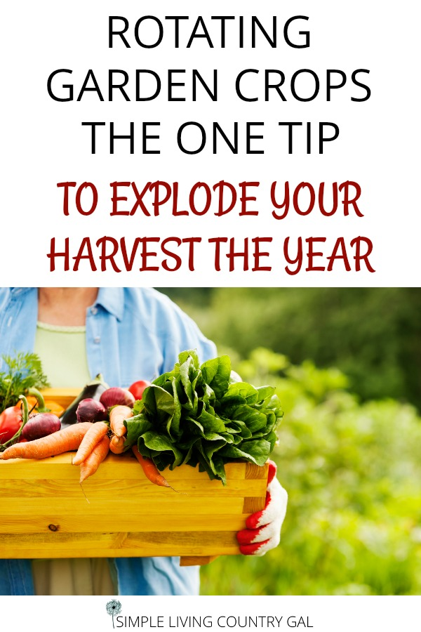 rotate your garden crops