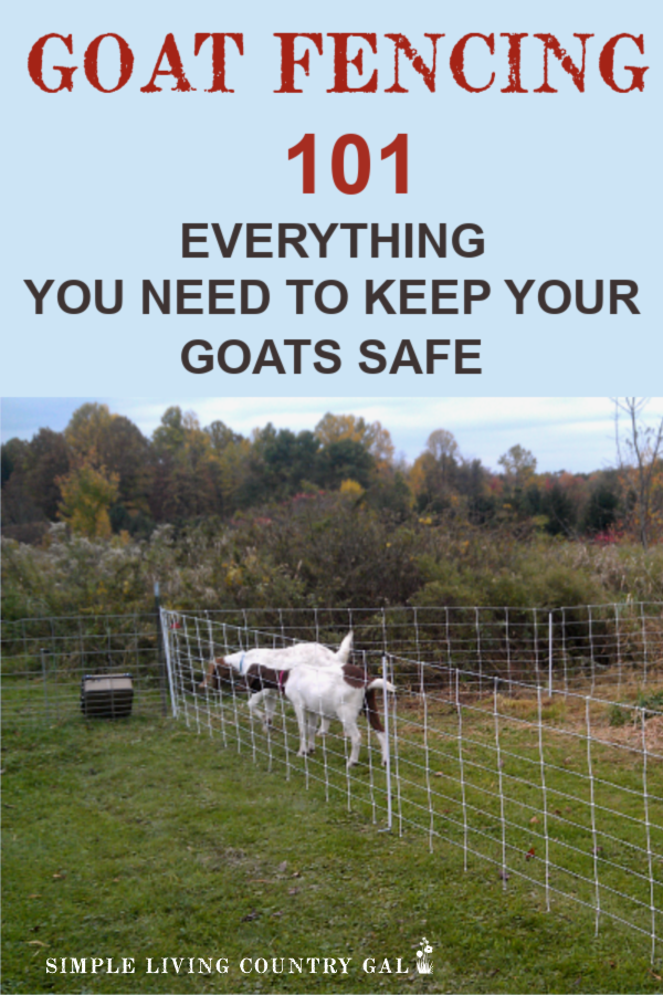 Just starting out on your goat raising journey? Read my tips on my top three goat fencing options to find out what to use when and why. Not all fencing is the same and not all goats are created equal. Find the best fence for your goats and keep them safe without blowing your budget. #goatfencing #goats #goatfence #slcg