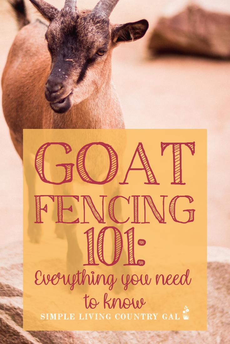 goat fencing 101