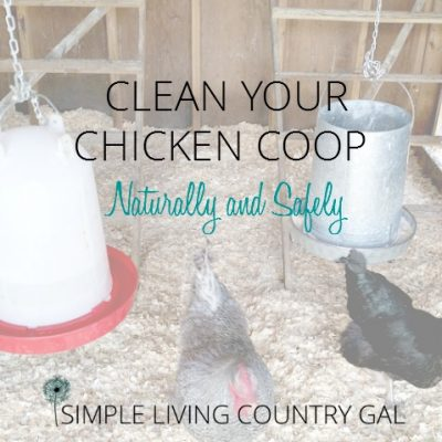 Follow these easy steps to clean and disinfect your chicken coop without chemicals