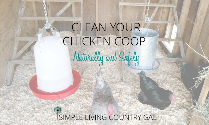 Cleaning Out The Chicken Coop Naturally and Safely
