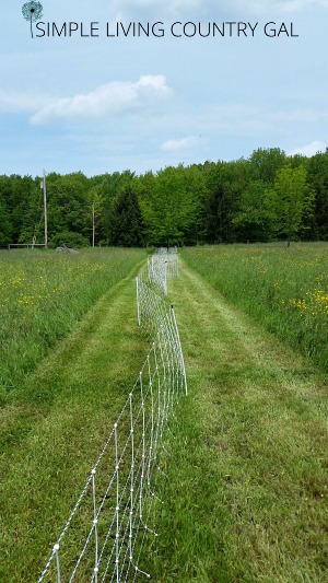 Trimming the fence line is an important chore that needs to be done to ensure your animals stay safe and secure. Keep your animals in and predators out.