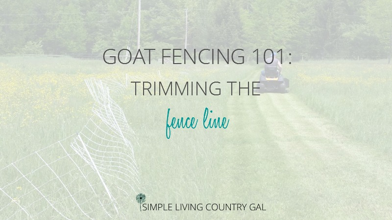 Goat Fencing – Trimming The Fence Line