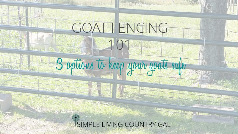 Goat Fencing 101, Everything You Need To Know
