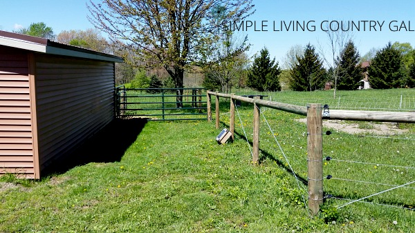 Goat Fencing 101, Everything You Need To Know | Simple Living