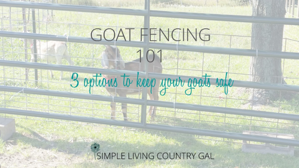 Goat Fencing 101 Everything You Need To Know Simple Living Electric Accessories 7 Strand Fence Wire Country Gal