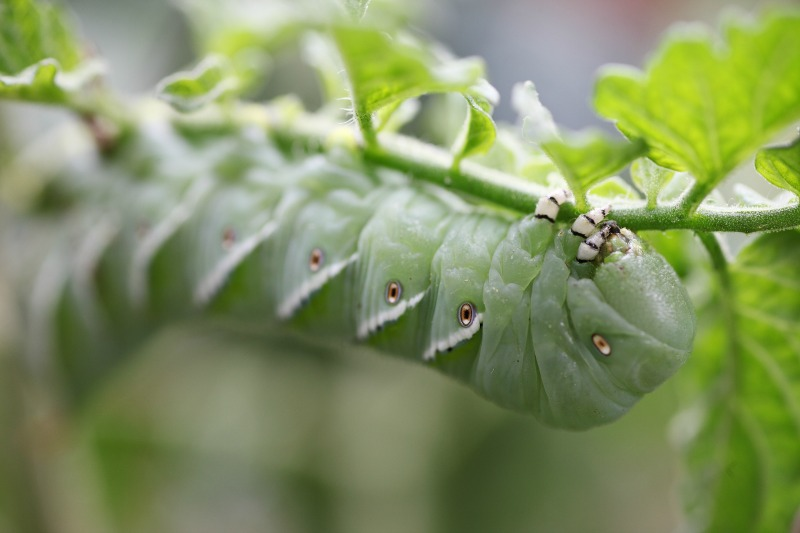 organic gardening pests for beginners
