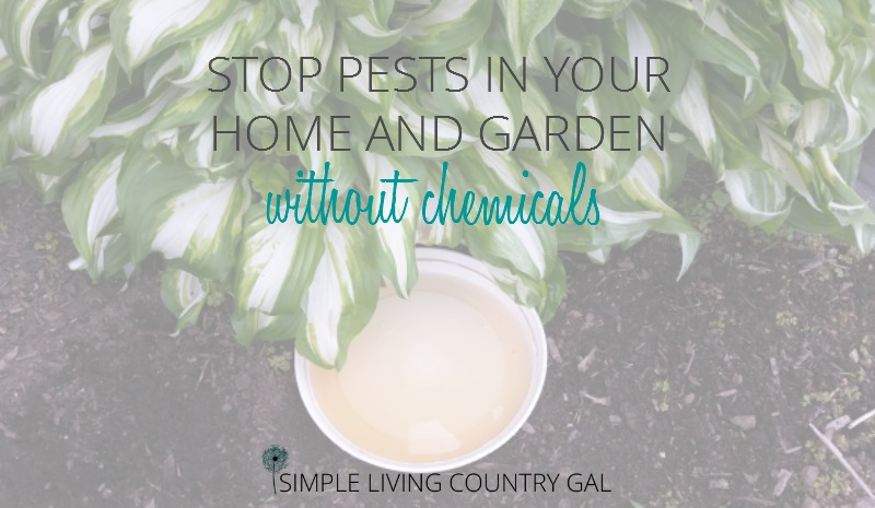 Stop Pests In Your Garden And Home Without Chemicals