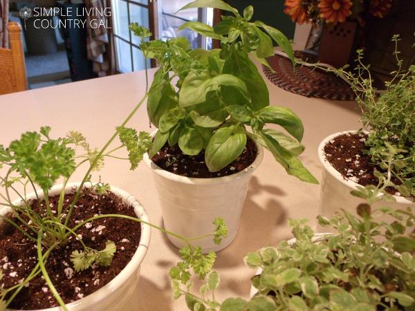 so simple diy kitchen herb garden - Simple Kitchen Herb Garden