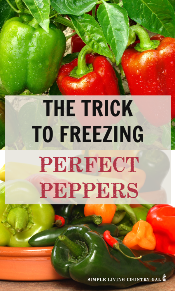 There is nothing worse than reaching into your freezer for some produce that you put up over the summer only to find a block of ice with frozen pepper chunks. Did you know there is a trick to freezing peppers? Find out my tips here! #garden #freezepeppers #canning