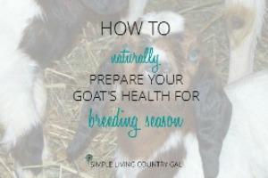 breeding season goats