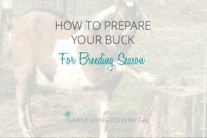 prepare your buck for breeding season