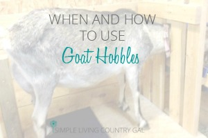 how to use goat hobbles