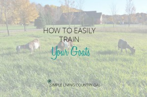 how to train your goats milkstand