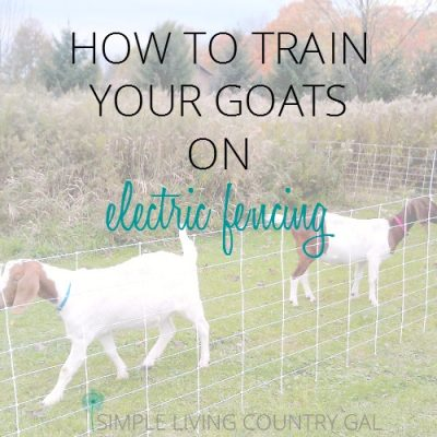 learn how to traing your goats on electric fencing