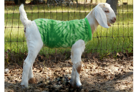 goat lovers gift guide
