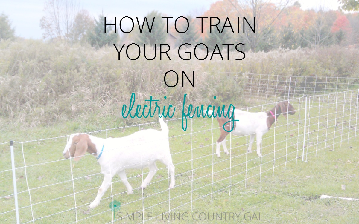 How To Train Goats On Electric Fence | Simple Living Country Gal