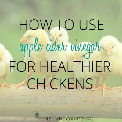 ACV and healthy chickens