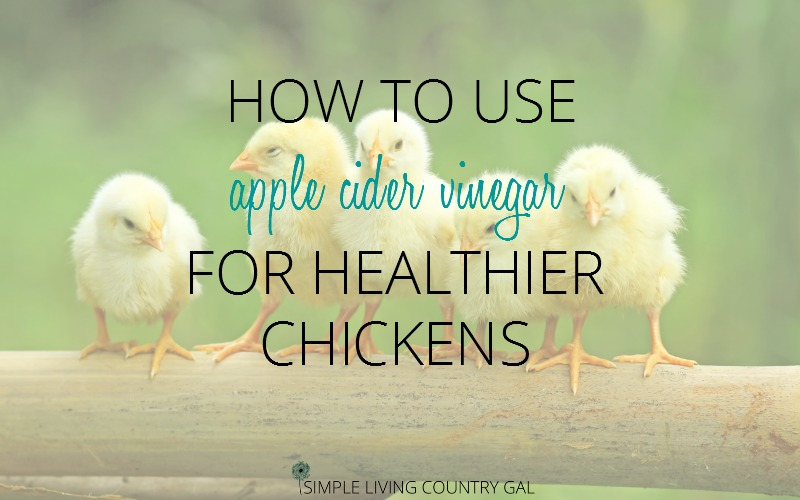 How To Use Apple Cider Vinegar for Healthy Chickens