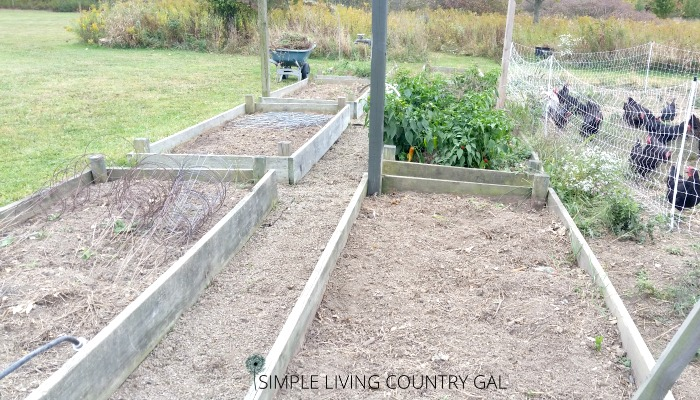 cleaned raised garden beds. Tips on how cleaning up the garden helps deter pests.