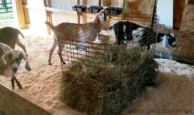 step by step how to clean out the barn for fall