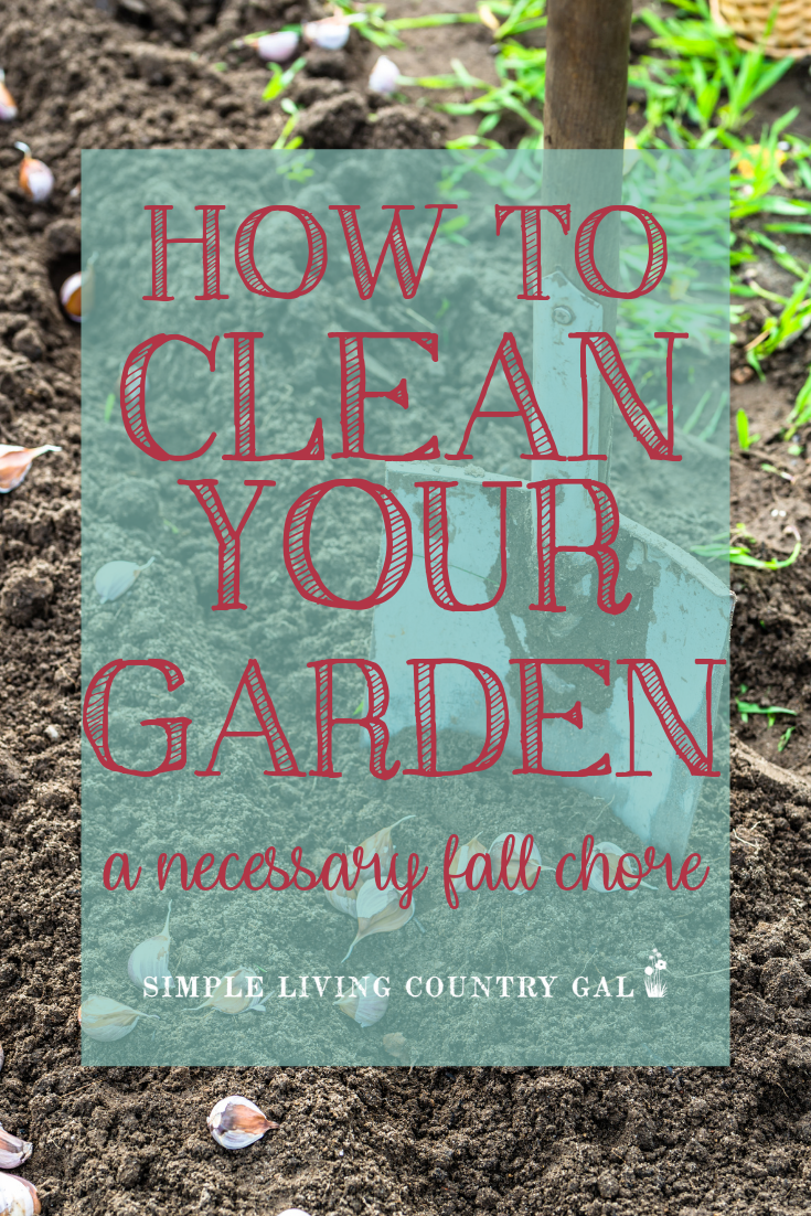 Fall garden clean up checklist. Everything you need to close up your vegetable garden and prepare it for spring planting. If you are a beginner gardener find out what you need to do to improve garden soil and stop garden pests so you can grow healthy tomatoes next summer. #gardentips #backyardgarden #gardening