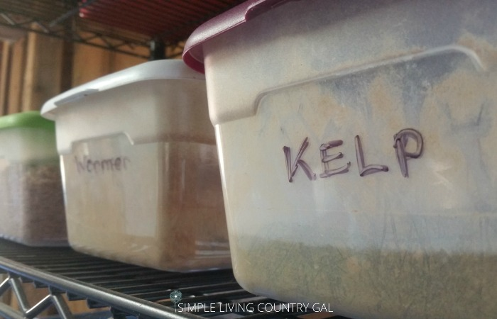 feeding kelp to your animals on the homestead