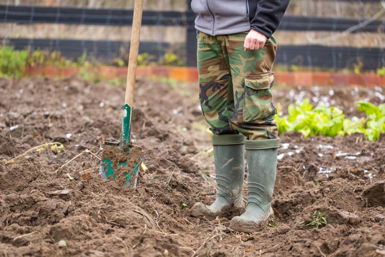 mulching a garden in the fall. Fall garden check list