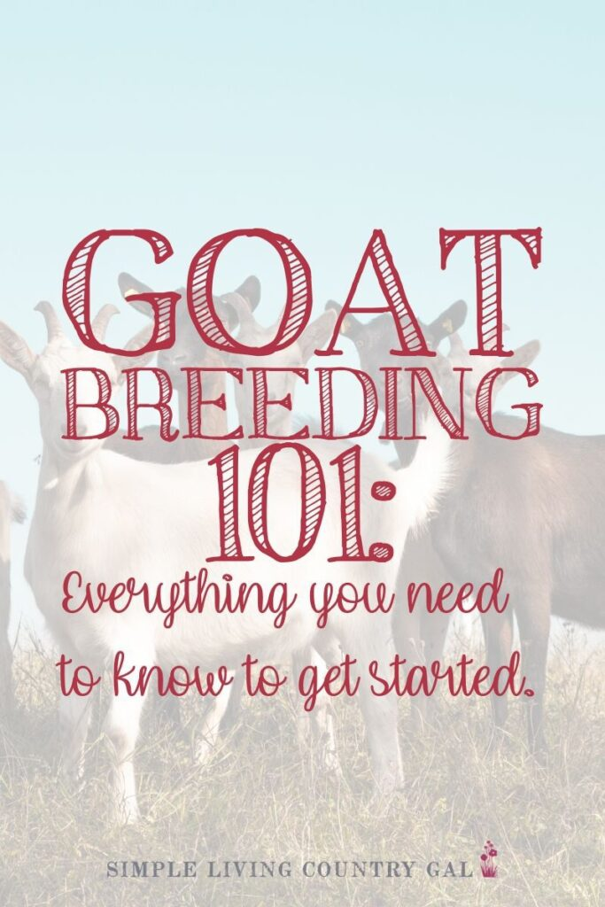 The easy way to breed your goats
