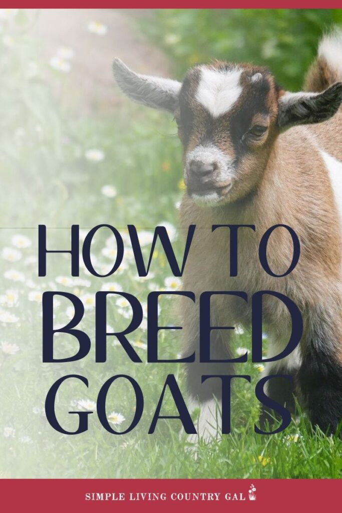 HOW TO BREED GOATS