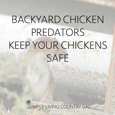 backyard chicken predators