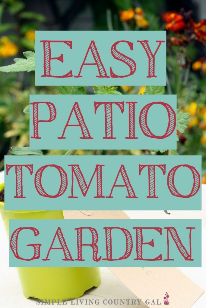 how to grow tomato plants in containers right out on your back porch. No garden needed! #containergardening #growtomatoes