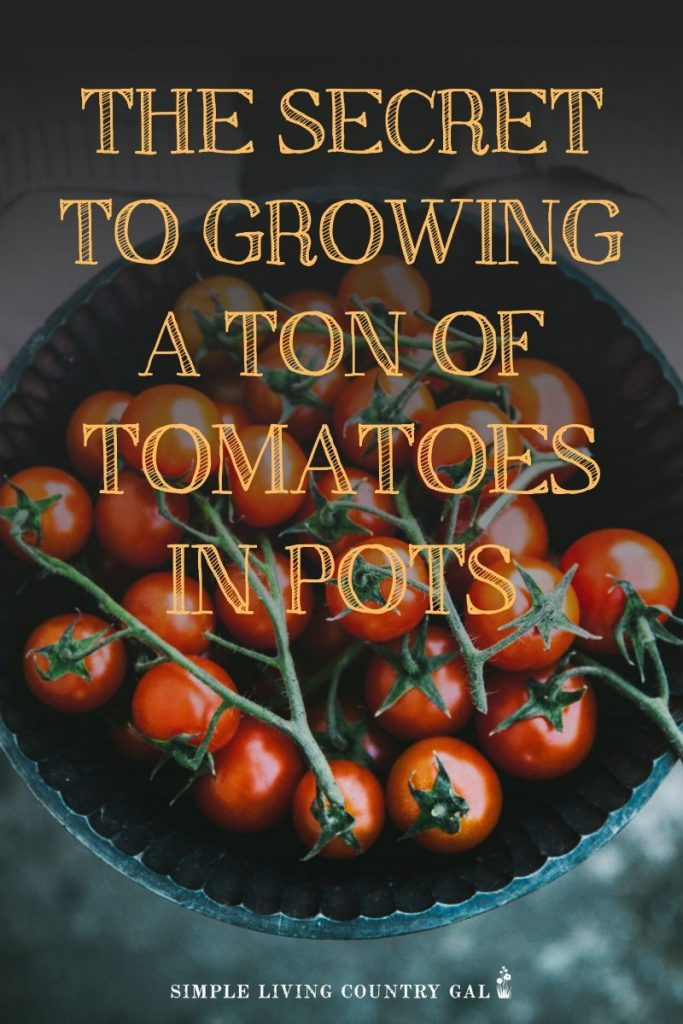How to grow tomatoes in pots. Tips on growing huge tomatoes in containers on your porch. How to have a garden right outside your own back door. Gardening tips for beginners and a step by step on how to grow veggies in pots.