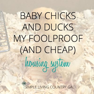 foolproof housing for baby chicks and ducklings