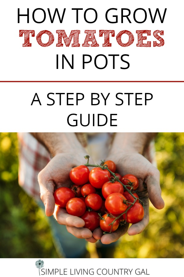 how to grow tomatoes in pots a step by step guide