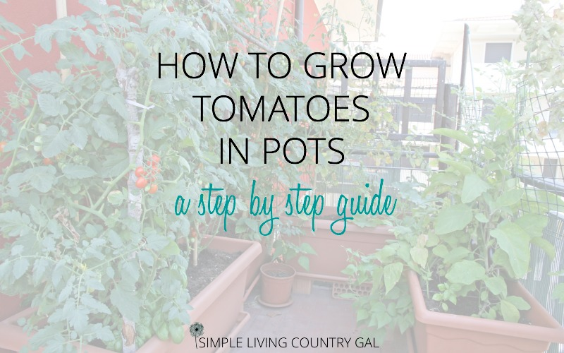 How To Grow Tomatoes In Pots – A Step By Step Guide