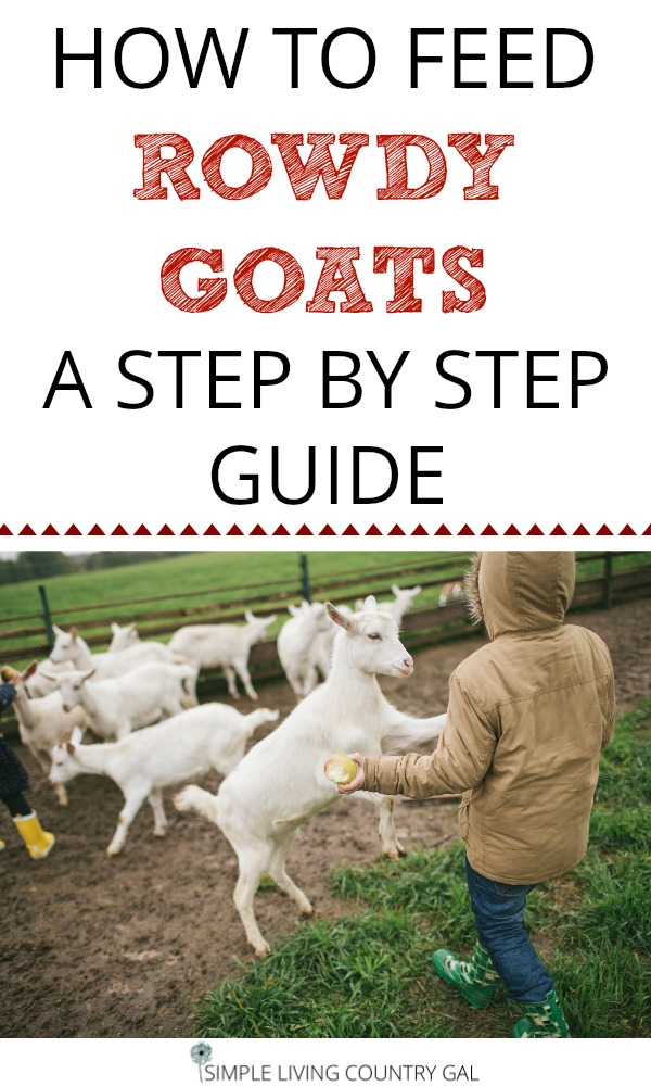 Finally, a way to feed a customized diet to each of your goats. See how you can teach your goats to tether feed and address issues for each. #dairygoats #feedinggoats #goats #howtofeedgoats