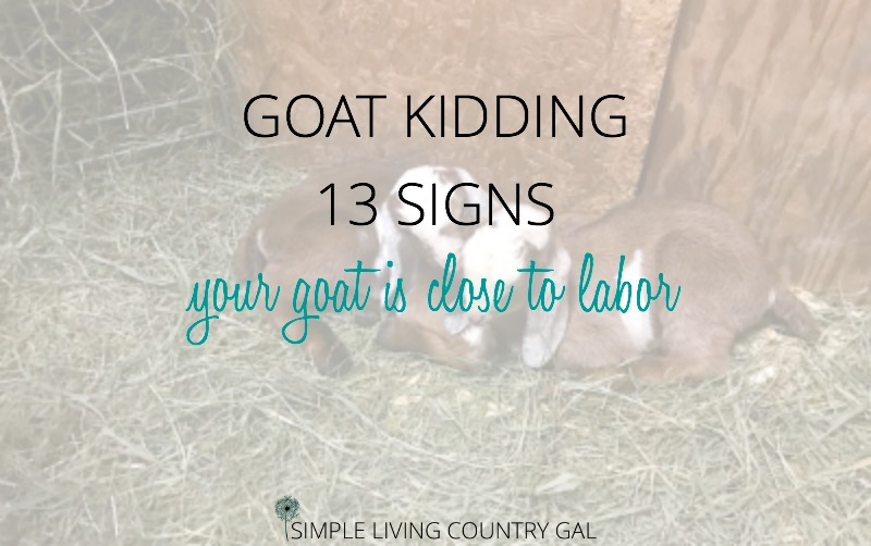 13 Goat Kidding Signs