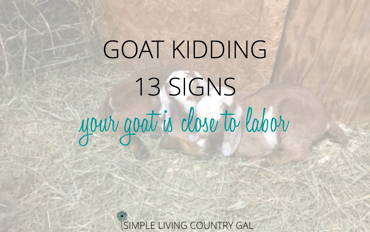 13 Goat Kidding Signs | Simple Living Country Gal