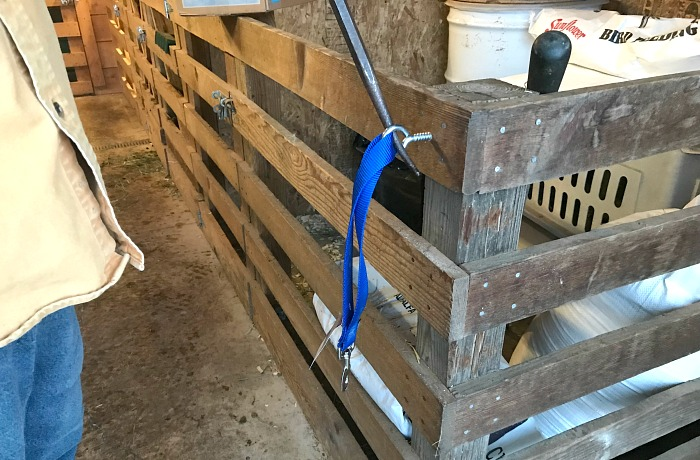 use and tighten an eye bolt to hold leads for tether feeding your rowdy dairy goats