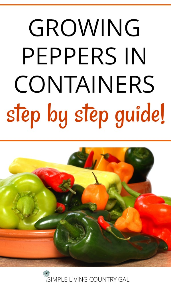 Do you live in the city and think you can't have a garden? No problem! Now you can have a variety of peppers right outside your door. Follow this step by step guide on how to grow peppers in containers. Perfect for your patio garden. #patiogarden #peppersincontainers