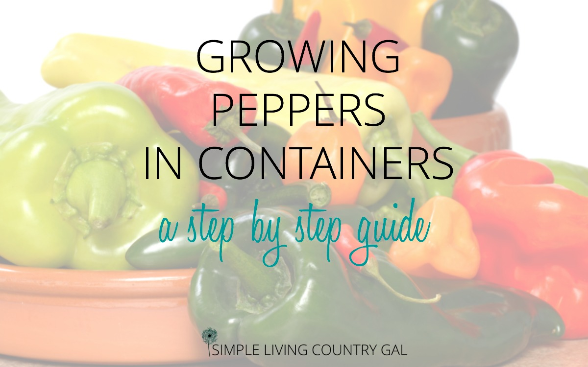 How to Grow Peppers in Containers – The City Garden