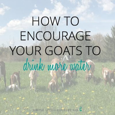encourage your goats to drink more water
