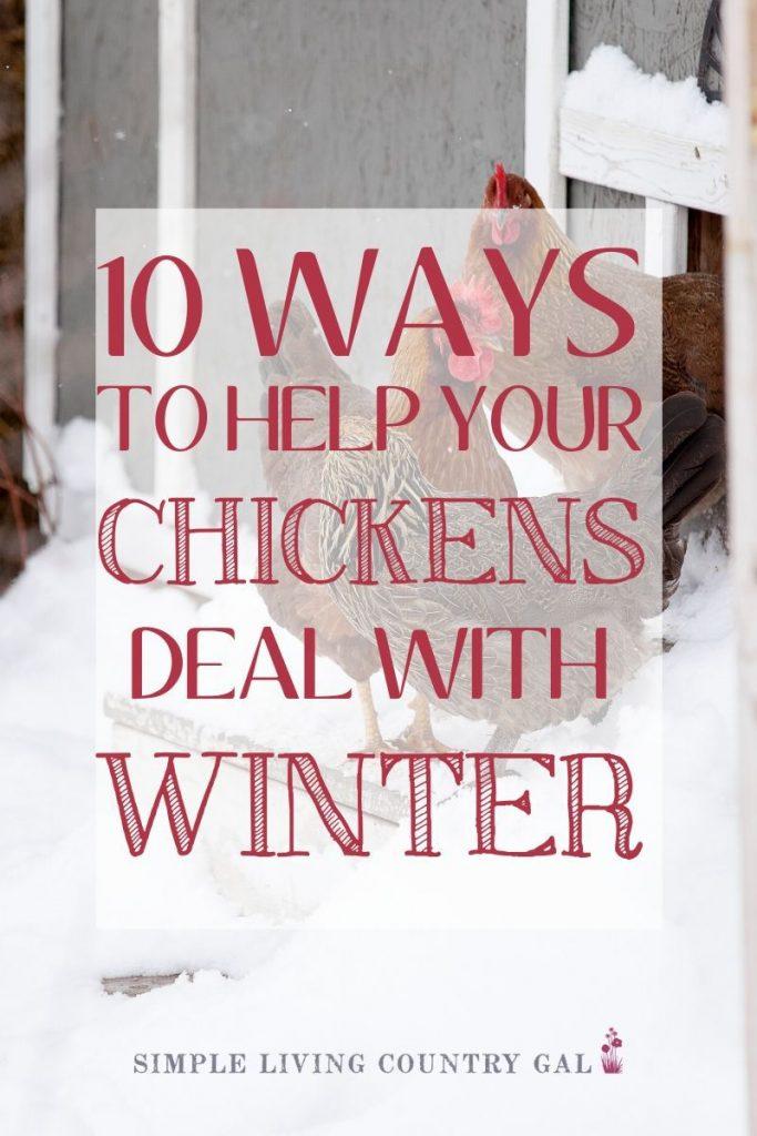 10 ways to prepare your chicken coop for winter