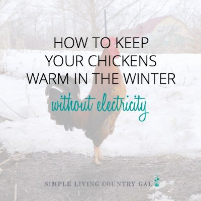 how to keep chickens warm in the winter without electricity