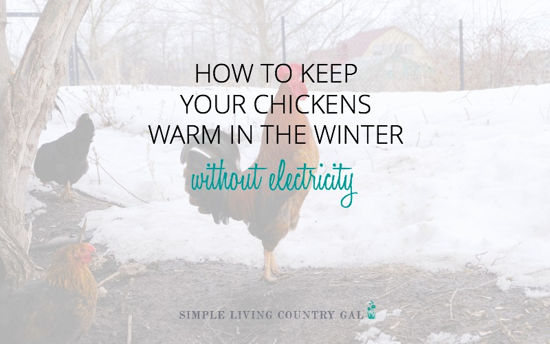 How To Keep Chickens Warm In Winter Without Electricity