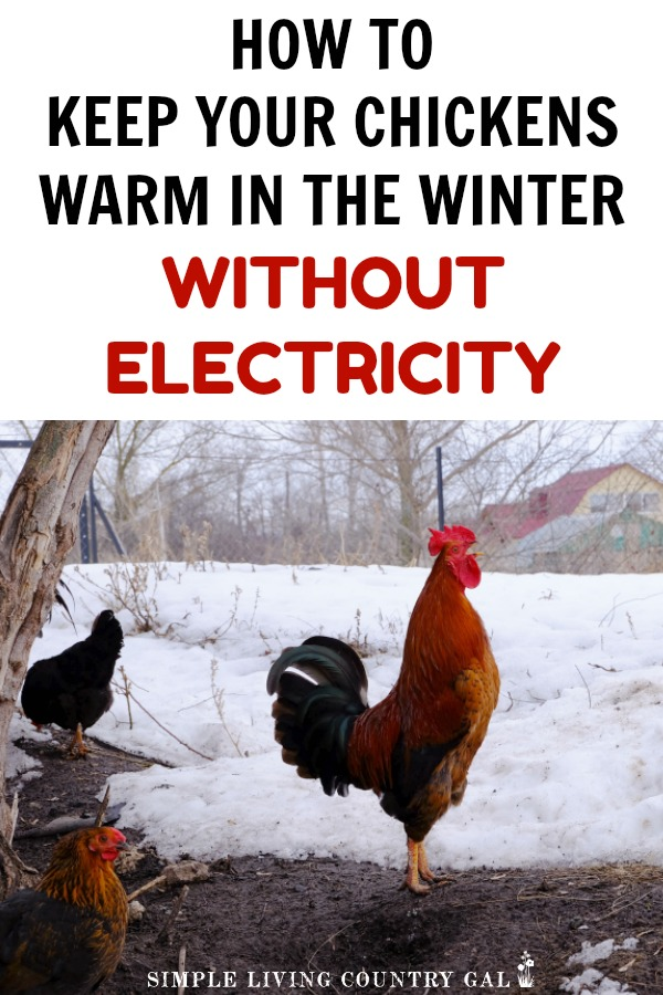 TIPS YOU CAN USE TO KEEP YOUR CHICKENS WARM IN THE WINTER EVEN IF YOU HAVE NO ELECTRICITY IN YOUR COOP